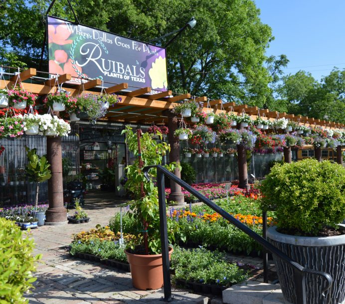 Opened In The Fall Of 2007 At Corner East Grand Avenue And Lavista Lakewood Or Whiterock Nursery Fills Needs Near Dallas